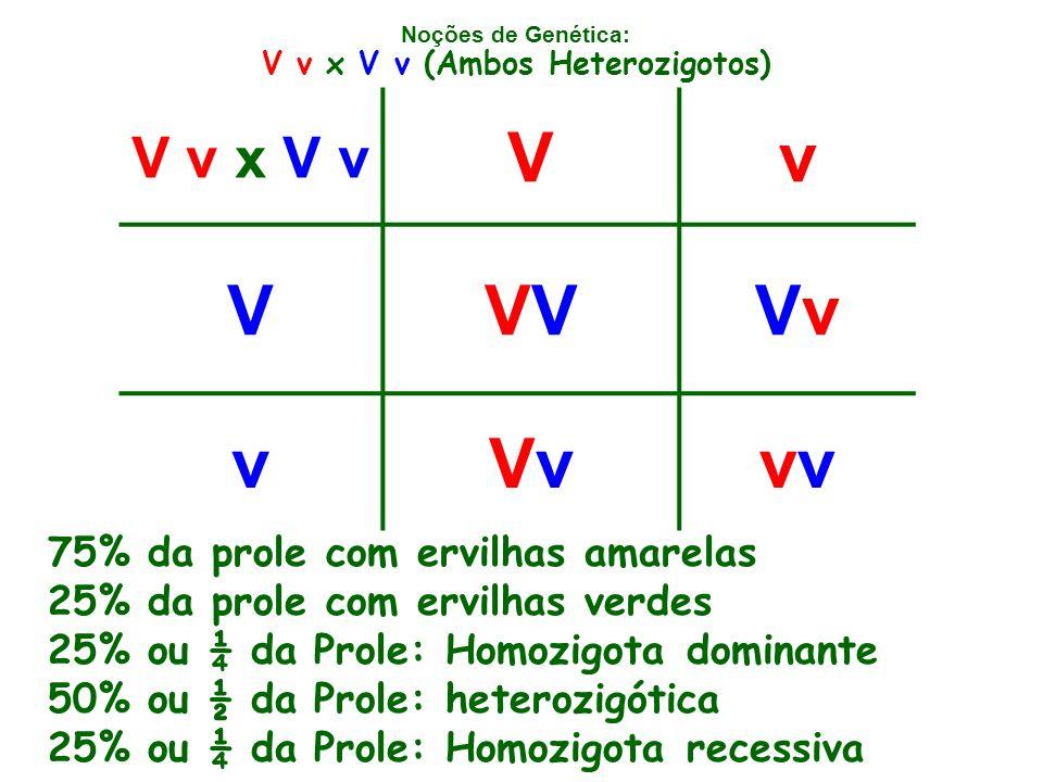 Noções de Genética: V v x V v Vv VVVvVv vVvVvv V v x V v (Ambos Heterozigotos) 75% da prole com ervilhas amarelas 25% da prole com ervilhas verdes 25% ou ¼ da Prole: Homozigota dominante 50% ou ½ da Prole: heterozigótica 25% ou ¼ da Prole: Homozigota recessiva