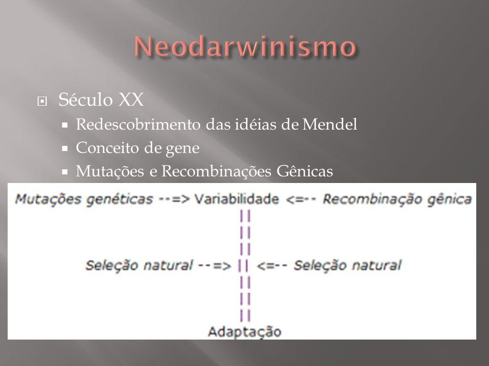 Século XX Redescobrimento das idéias de Mendel Conceito de gene Mutações e Recombinações Gênicas