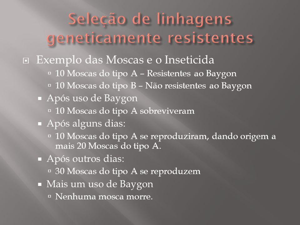 Exemplo das Moscas e o Inseticida 10 Moscas do tipo A – Resistentes ao Baygon 10 Moscas do tipo B – Não resistentes ao Baygon Após uso de Baygon 10 Mo