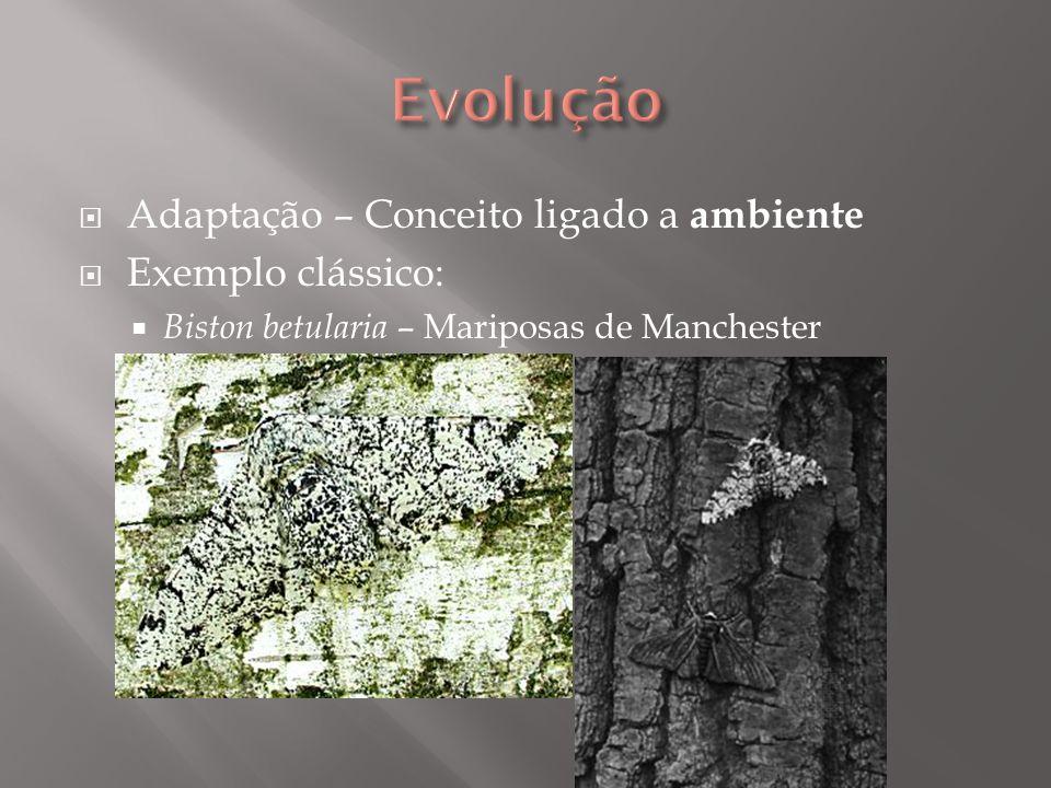 Adaptação – Conceito ligado a ambiente Exemplo clássico: Biston betularia – Mariposas de Manchester
