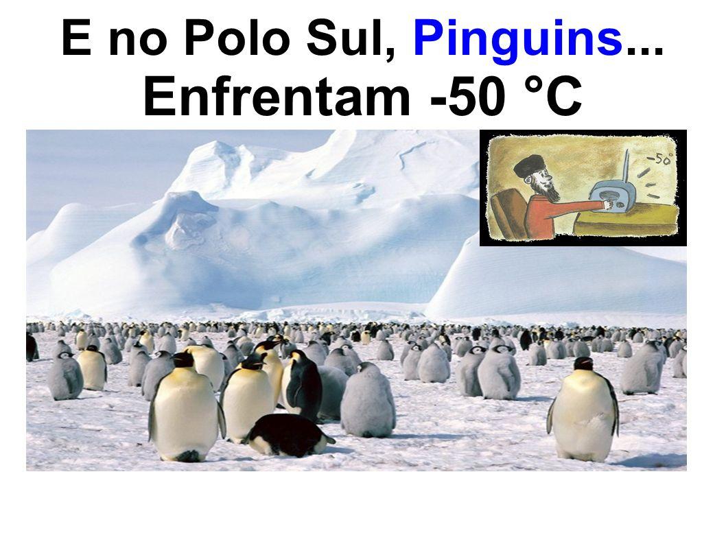 E no Polo Sul, Pinguins... Enfrentam -50 °C