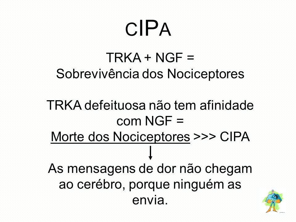 C IP A TRKA + NGF = Sobrevivência dos Nociceptores TRKA defeituosa não tem afinidade com NGF = Morte dos Nociceptores >>> CIPA As mensagens de dor não