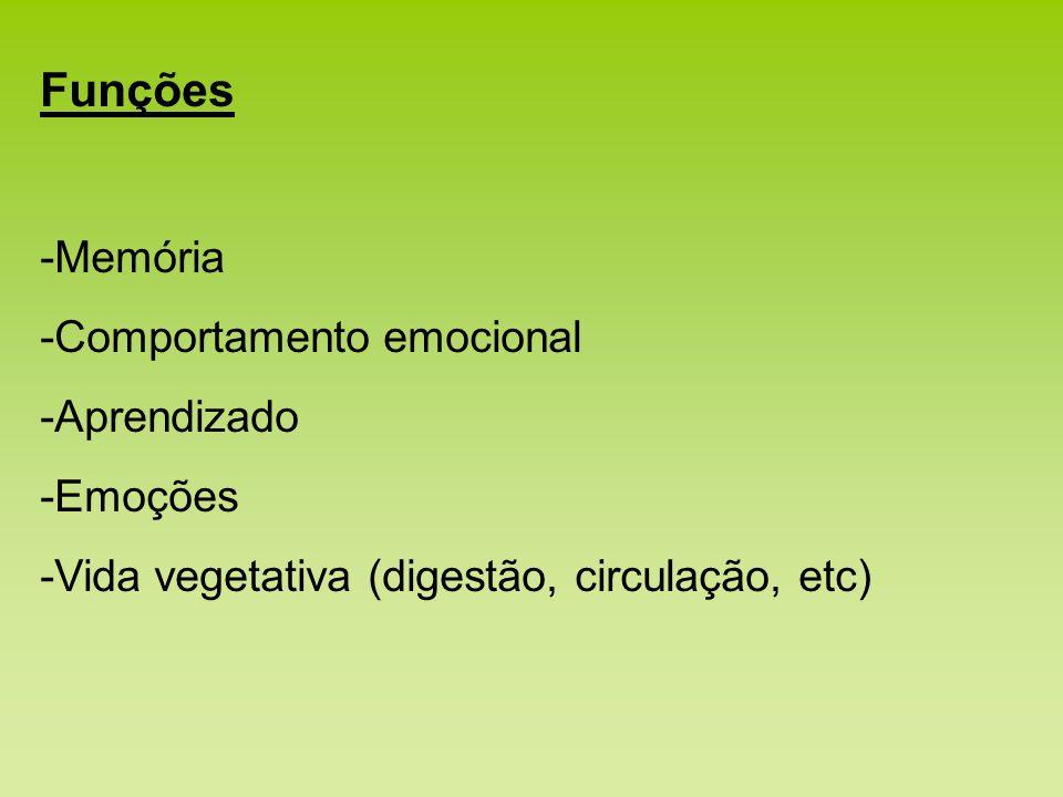 Funções -Memória -Comportamento emocional -Aprendizado -Emoções -Vida vegetativa (digestão, circulação, etc)