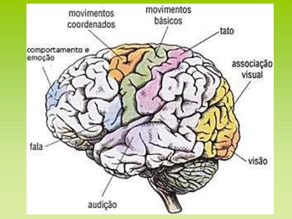 Teorias: - Falta de baia de mielina.