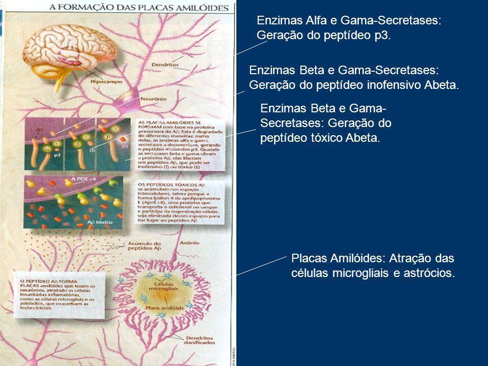 Enzimas Alfa e Gama-Secretases: Geração do peptídeo p3. Enzimas Beta e Gama-Secretases: Geração do peptídeo inofensivo Abeta. Enzimas Beta e Gama- Sec
