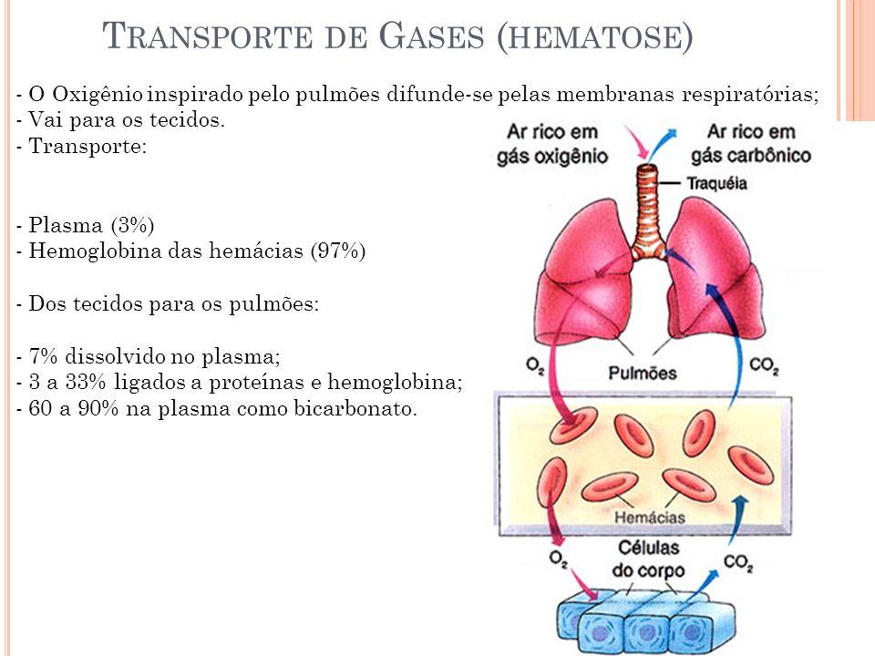T RANSPORTE DE G ASES ( HEMATOSE ) - O Oxigênio inspirado pelo pulmões difunde-se pelas membranas respiratórias; - Vai para os tecidos. - Transporte: