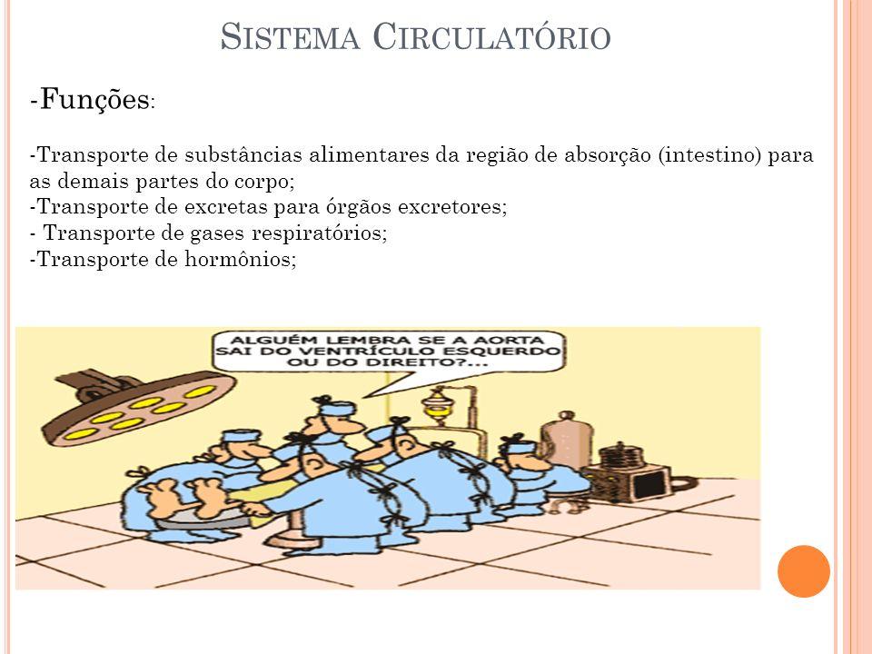 S ISTEMA C IRCULATÓRIO -Funções : -Transporte de substâncias alimentares da região de absorção (intestino) para as demais partes do corpo; -Transporte