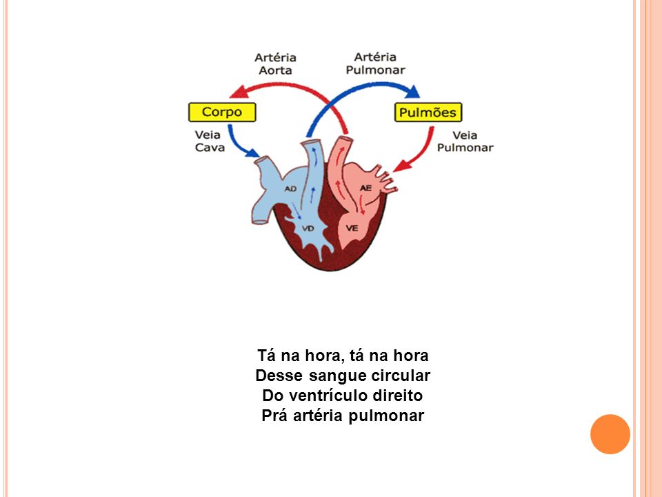 Tá na hora, tá na hora Desse sangue circular Do ventrículo direito Prá artéria pulmonar