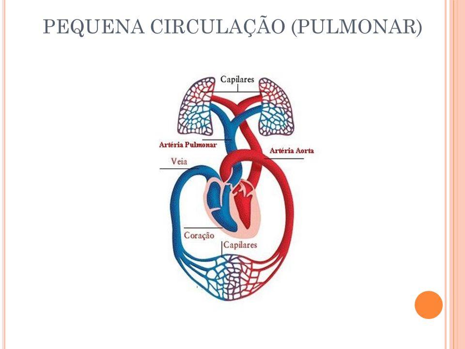 PEQUENA CIRCULAÇÃO (PULMONAR)