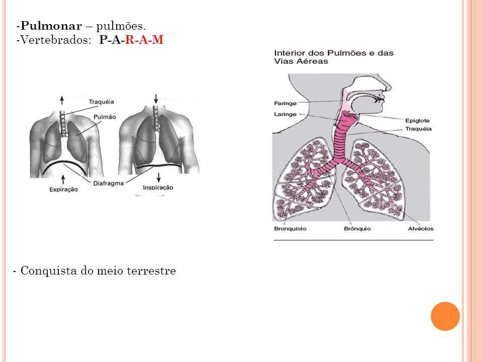 - Pulmonar – pulmões. -Vertebrados: P-A-R-A-M - Conquista do meio terrestre