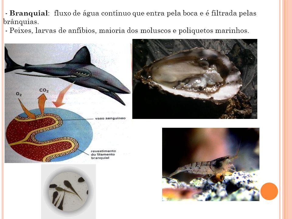 - Branquial : fluxo de água contínuo que entra pela boca e é filtrada pelas brânquias. - Peixes, larvas de anfíbios, maioria dos moluscos e poliquetos