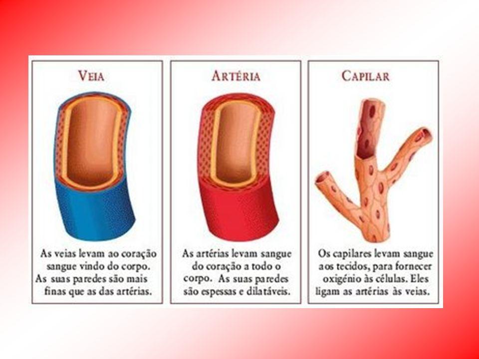 Circulação Humana - Coração Entre os dois pulmões Tecido muscular cardíaco – involuntário – miocárdio Envolvido por membrana fibrosa – pericárdio 1 - Coronária Direita 2 - Coronária Descendente Anterior Esquerda 3 - Coronária Circunflexa Esquerda 4 - Veia Cava Superior 5 - Veia Cava Inferior 6 - Aorta 7 - Artéria Pulmonar 8 - Veias Pulmonares