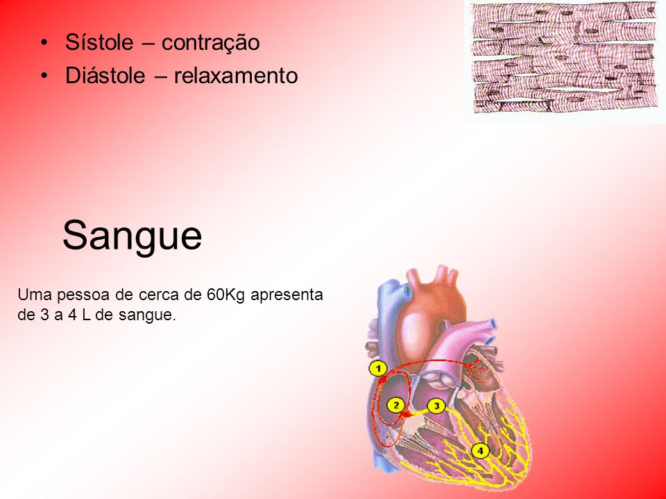 Sístole – contração Diástole – relaxamento Uma pessoa de cerca de 60Kg apresenta de 3 a 4 L de sangue. Sangue