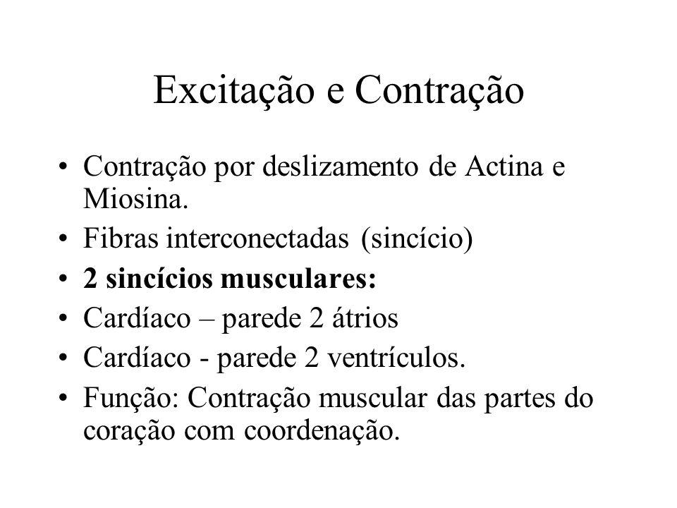 Excitação e Contração Contração por deslizamento de Actina e Miosina.