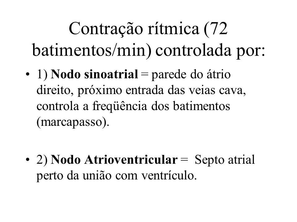 Contração rítmica (72 batimentos/min) controlada por: 1) Nodo sinoatrial = parede do átrio direito, próximo entrada das veias cava, controla a freqüência dos batimentos (marcapasso).