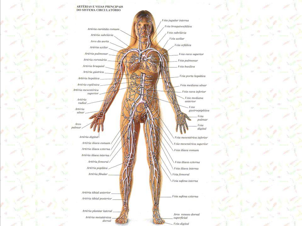 Componentes do Sistema Tubular Artérias alta ( ) de elastina Arteríolas (musculatura lisa) – resistência periférica.