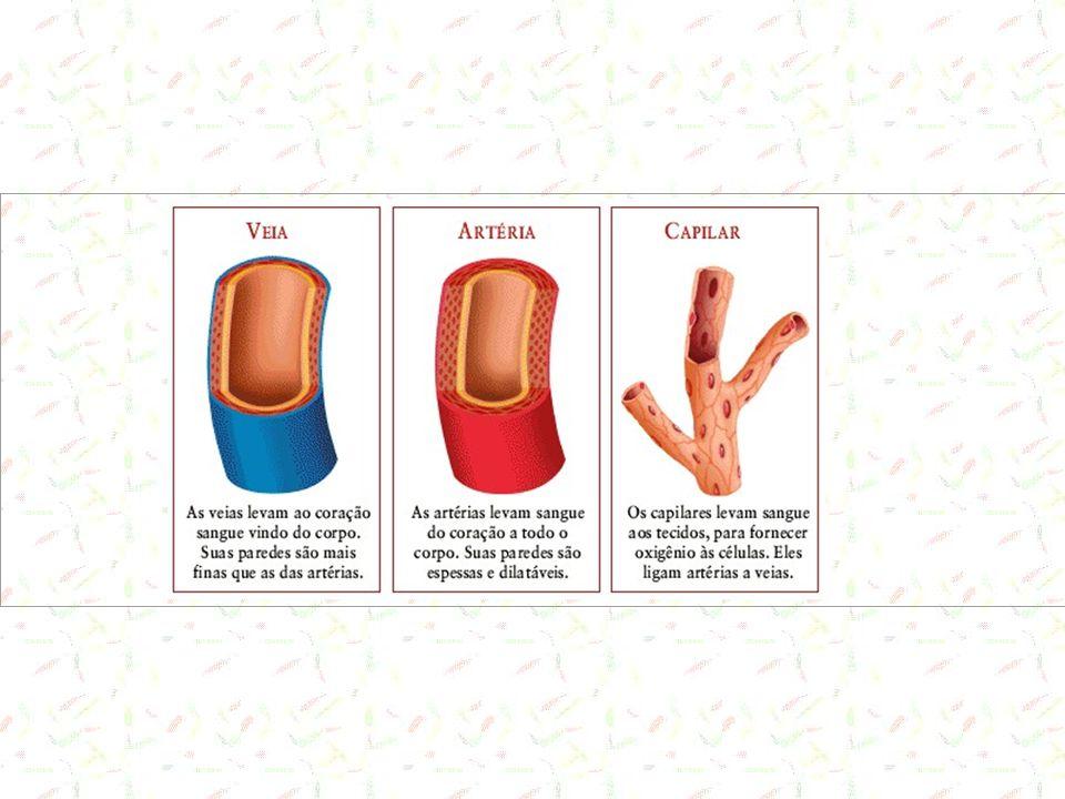 Artérias Perdem tecido elástico com as ramificações Transformam a ejeção pulsátil do sangue pelo coração em fluxo constante até atingir as arteríolas.
