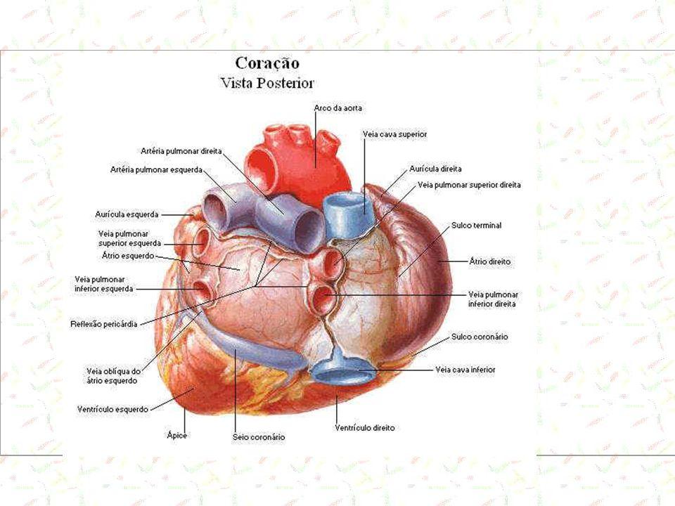 Lei do Coração A quantidade de sangue que é bombeada pelo coração é, normalmente, determinada pela quantidade de sangue que chega ao átrio direito, trazido pelas grandes veias.