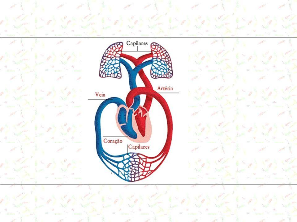 Pressão Sanguínea Força que o sangue exerce contra as paredes do vaso (distensão do vaso) Importante para o movimento sanguíneo.