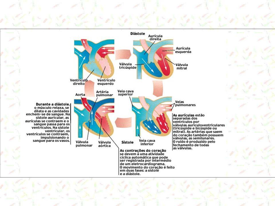 Veias Depósito de sangue em função da alta distenbilidade (baixa pressão) Conduto para o transporte do sangue dos tecidos ao coração 60% do total do sangue está nas veias Presença de valvas