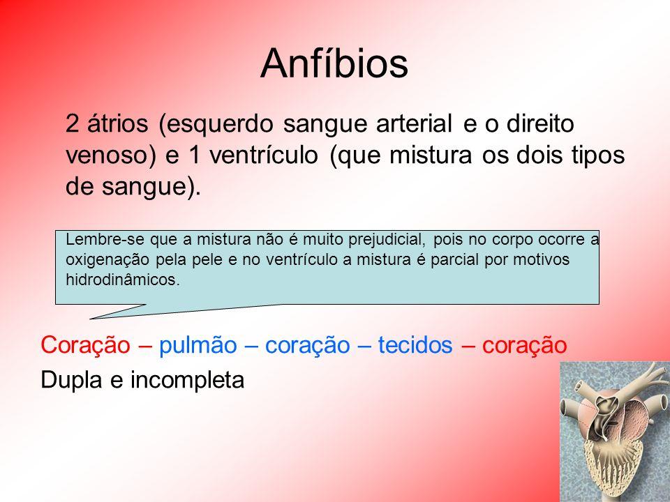 Anfíbios 2 átrios (esquerdo sangue arterial e o direito venoso) e 1 ventrículo (que mistura os dois tipos de sangue). Lembre-se que a mistura não é mu