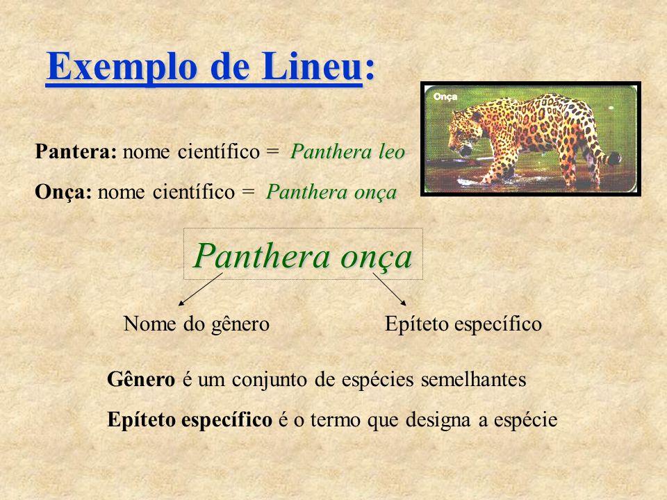 Exemplo de Lineu: Panthera leo Pantera: nome científico = Panthera leo Panthera onça Onça: nome científico = Panthera onça Panthera onça Nome do gêneroEpíteto específico Gênero é um conjunto de espécies semelhantes Epíteto específico é o termo que designa a espécie
