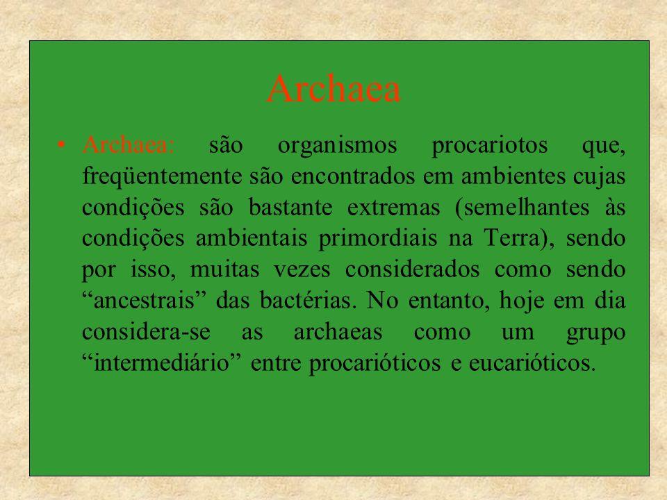 Bacteria: Bactéria: Corresponde a um enorme grupo de procariotos, anteriormente classificados como eubactérias, representadas pelos organismos patogênicos ao homem, e bactérias encontradas nas águas, solos, ambientes em geral