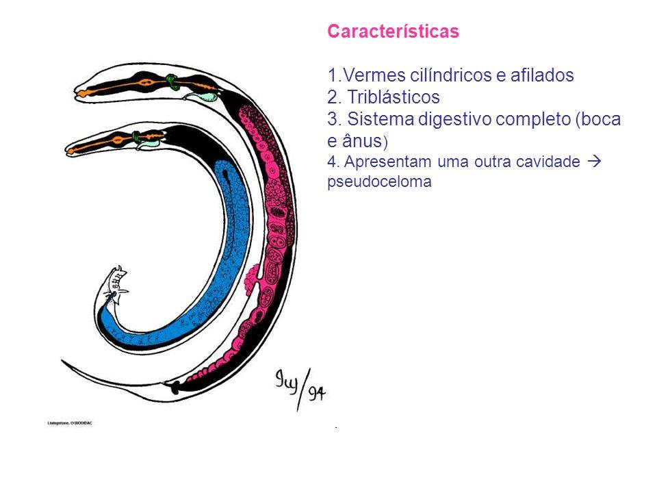 Características 1.Vermes cilíndricos e afilados 2. Triblásticos 3. Sistema digestivo completo (boca e ânus ) 4. Apresentam uma outra cavidade pseudoce