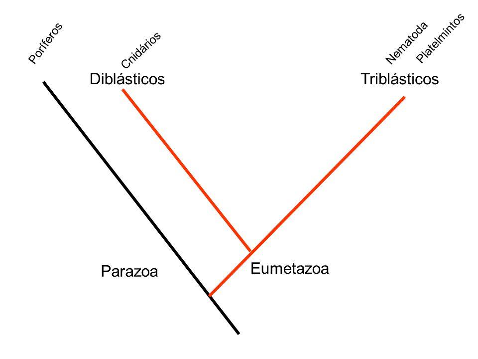 DiblásticosTriblásticos Eumetazoa Parazoa Poríferos Nematoda Platelmintos Cnidários
