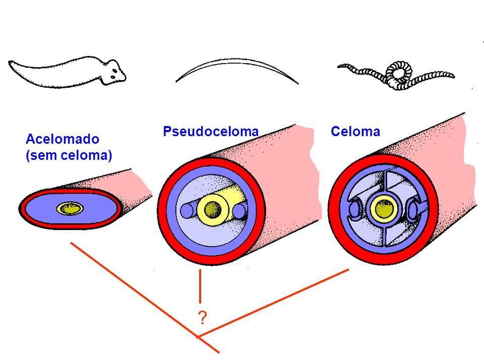 Pseudoceloma Acelomado (sem celoma) Celoma ?