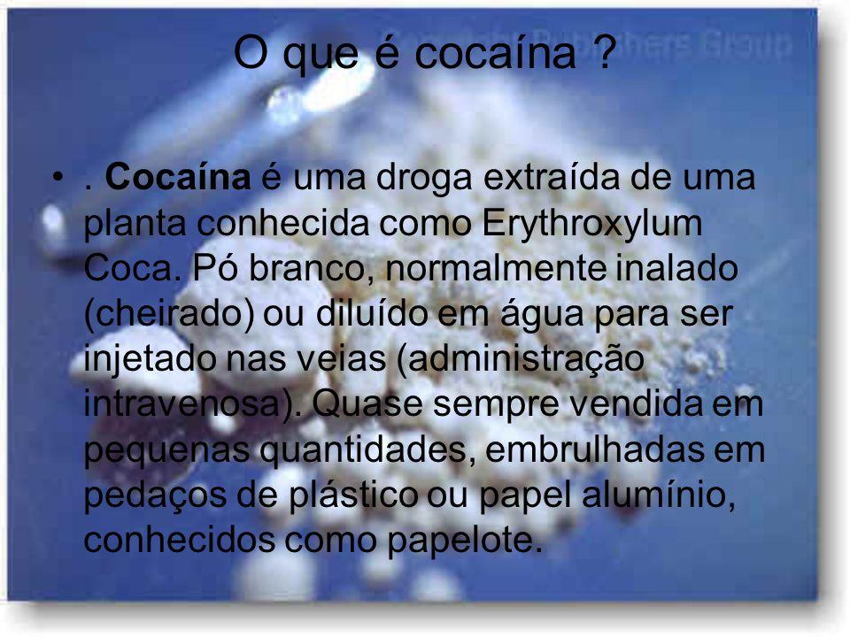 O que é cocaína ?. Cocaína é uma droga extraída de uma planta conhecida como Erythroxylum Coca. Pó branco, normalmente inalado (cheirado) ou diluído e
