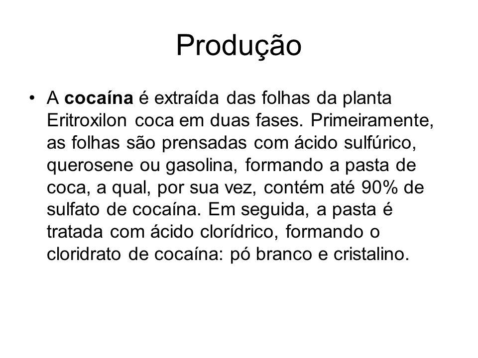 Produção A cocaína é extraída das folhas da planta Eritroxilon coca em duas fases. Primeiramente, as folhas são prensadas com ácido sulfúrico, querose