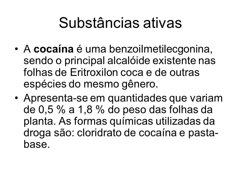 Substâncias ativas A cocaína é uma benzoilmetilecgonina, sendo o principal alcalóide existente nas folhas de Eritroxilon coca e de outras espécies do