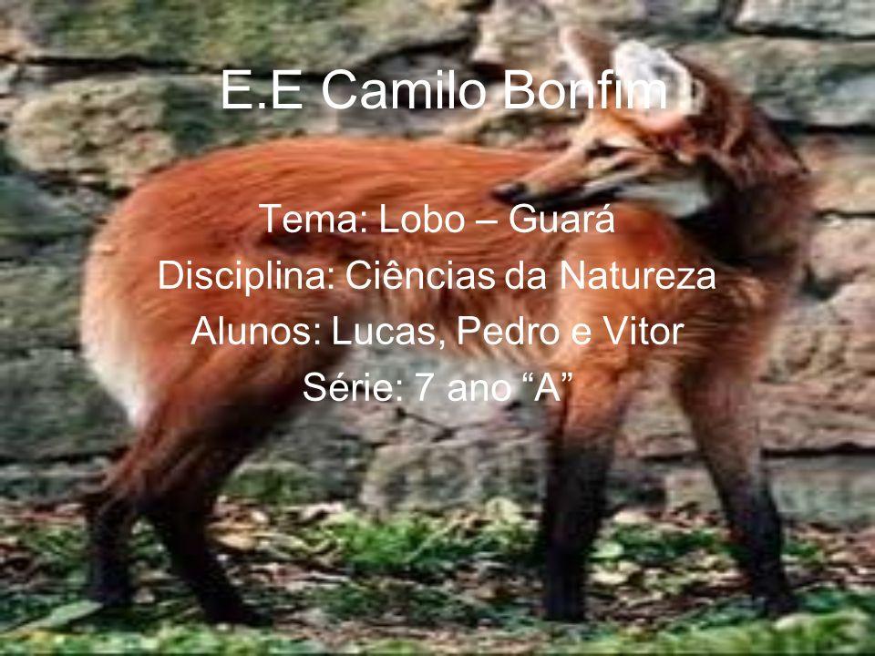 E.E Camilo Bonfim Tema: Lobo – Guará Disciplina: Ciências da Natureza Alunos: Lucas, Pedro e Vitor Série: 7 ano A