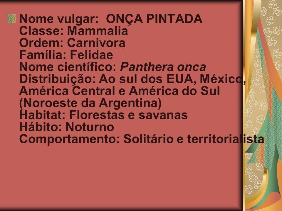 Nome vulgar: ONÇA PINTADA Classe: Mammalia Ordem: Carnivora Família: Felidae Nome científico: Panthera onca Distribuição: Ao sul dos EUA, México, Amér