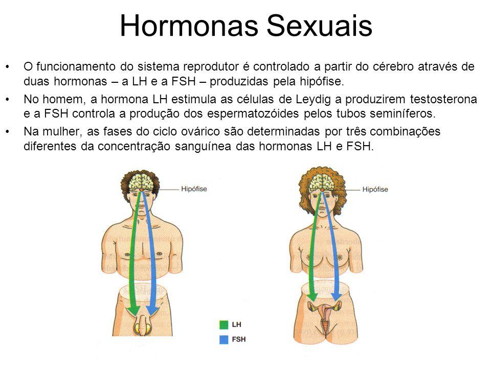 Hormonas Sexuais O funcionamento do sistema reprodutor é controlado a partir do cérebro através de duas hormonas – a LH e a FSH – produzidas pela hipó