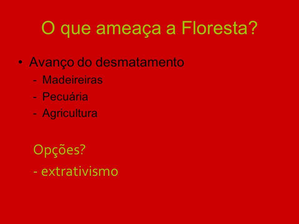 O que ameaça a Floresta? Avanço do desmatamento -Madeireiras -Pecuária -Agricultura Opções? - extrativismo