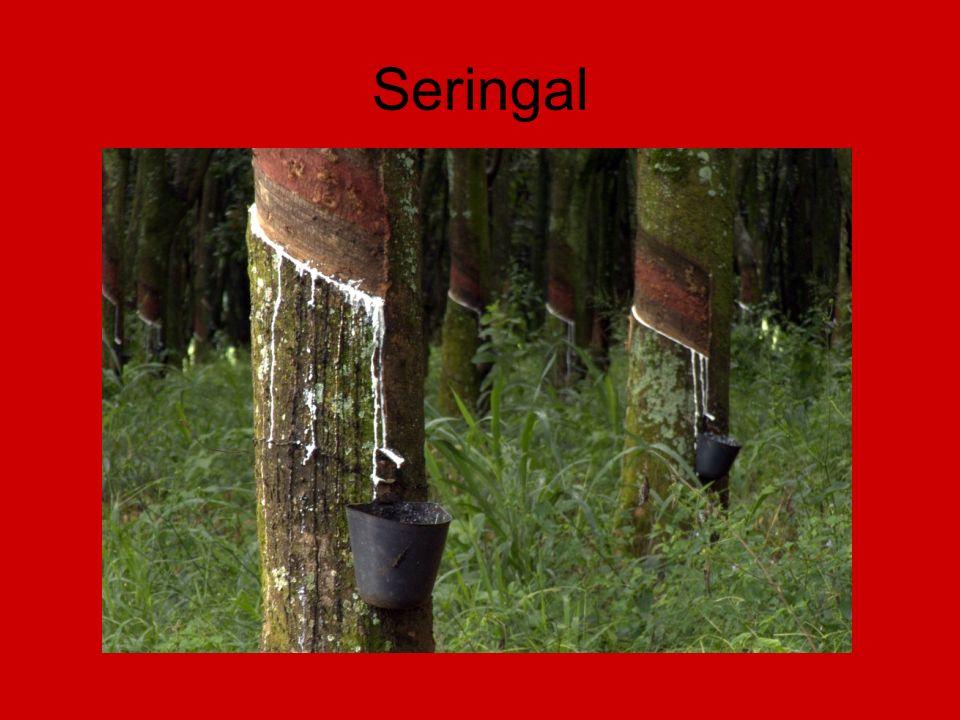 Seringal