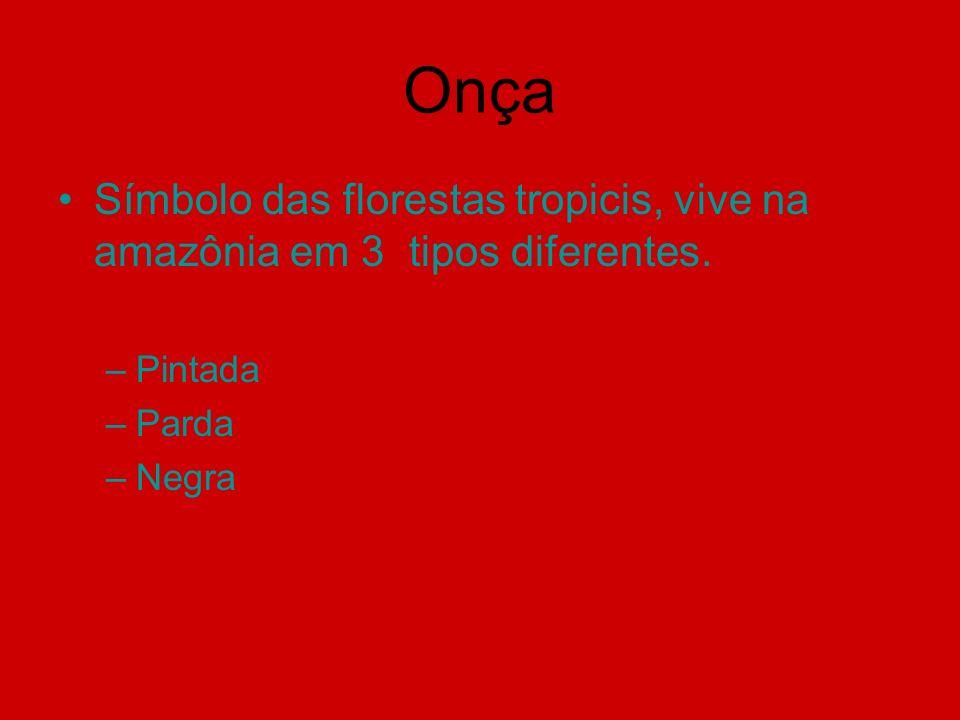 Onça Símbolo das florestas tropicis, vive na amazônia em 3 tipos diferentes. –Pintada –Parda –Negra