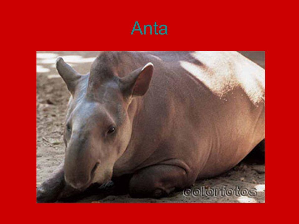 Pesquisa – Animais da Amazônia http://www.colorfotos.com.br/amazonia.htm http://portalamazonia.globo.com/ 4 animais.