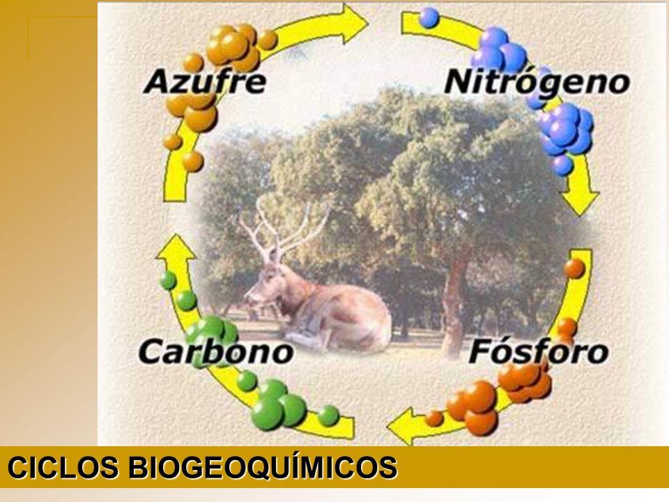 BIO = seres vivos GEO = atmosfera, hidrosfera e litosfera QUÍMICOS = componentes químicos Estudo das trocas de materiais entre componentes vivos e não vivos da Biosfera (reciclagem de materiais do Ecossistema)