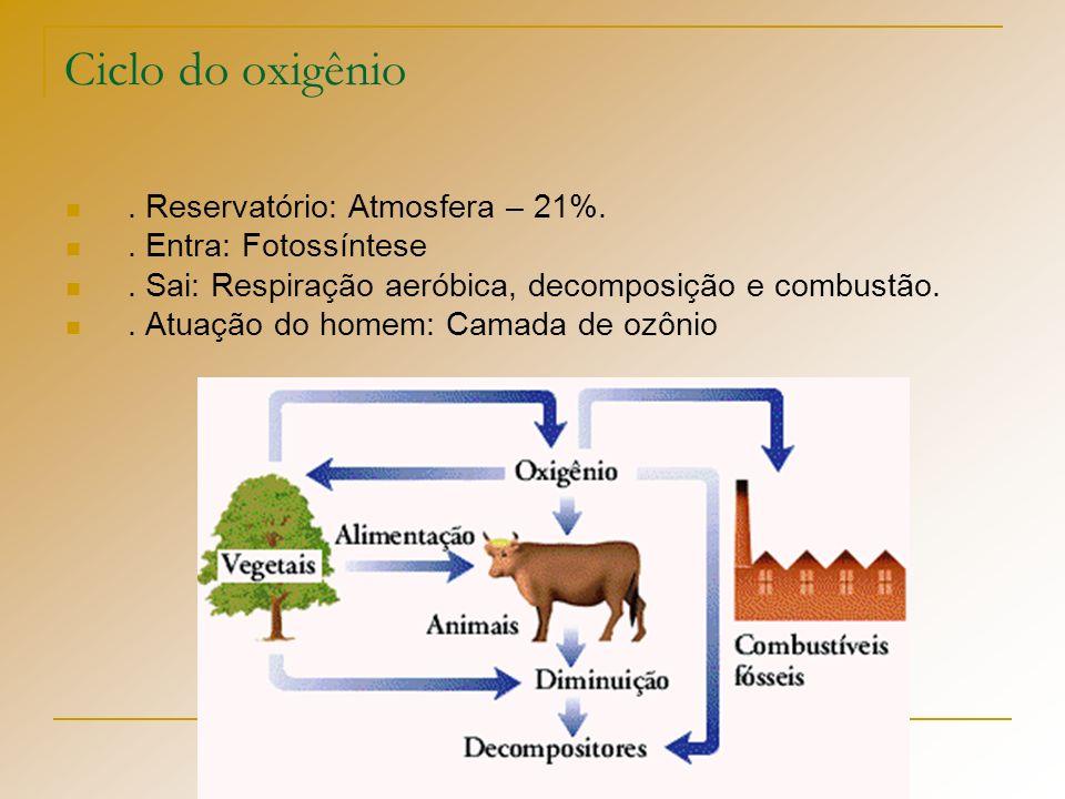 Ciclo do oxigênio. Reservatório: Atmosfera – 21%.. Entra: Fotossíntese. Sai: Respiração aeróbica, decomposição e combustão.. Atuação do homem: Camada