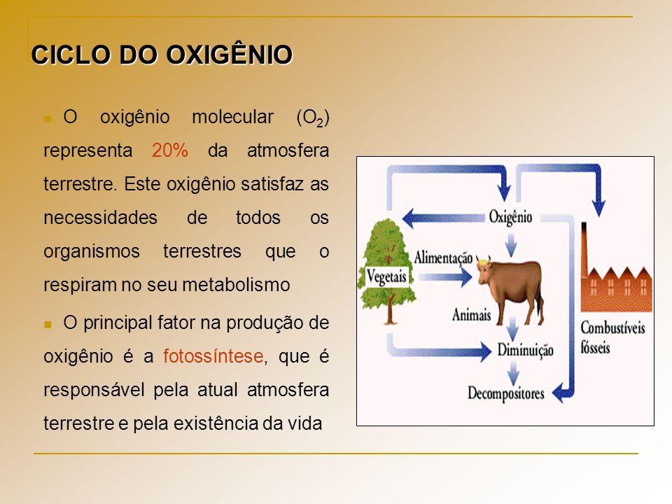CICLO DO OXIGÊNIO O oxigênio molecular (O 2 ) representa 20% da atmosfera terrestre. Este oxigênio satisfaz as necessidades de todos os organismos ter