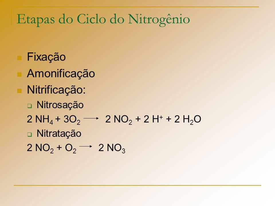 Etapas do Ciclo do Nitrogênio Fixação Amonificação Nitrificação: Nitrosação 2 NH 4 + 3O 2 2 NO 2 + 2 H + + 2 H 2 O Nitratação 2 NO 2 + O 2 2 NO 3