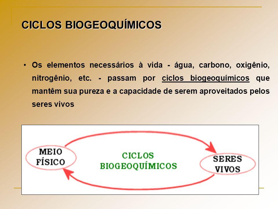 Os ciclos biogeoquímicos são essenciais para restabelecer o equilíbrio dos ecossistemas.