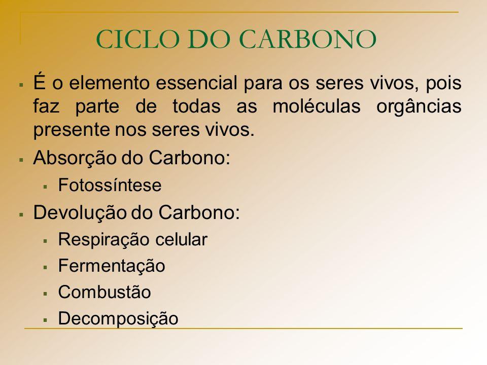 CICLO DO CARBONO É o elemento essencial para os seres vivos, pois faz parte de todas as moléculas orgâncias presente nos seres vivos. Absorção do Carb