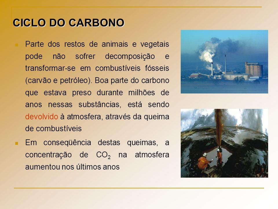 As atividades humanas lançam CO 2 na atmosfera numa velocidade cada vez maior.