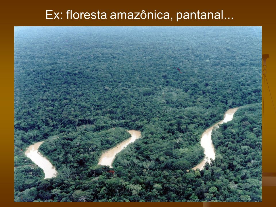 Ex: floresta amazônica, pantanal...
