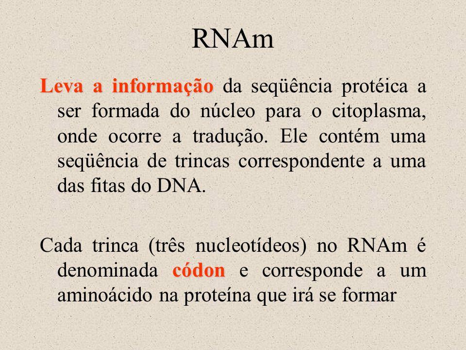 RNAm Leva a informação Leva a informação da seqüência protéica a ser formada do núcleo para o citoplasma, onde ocorre a tradução. Ele contém uma seqüê
