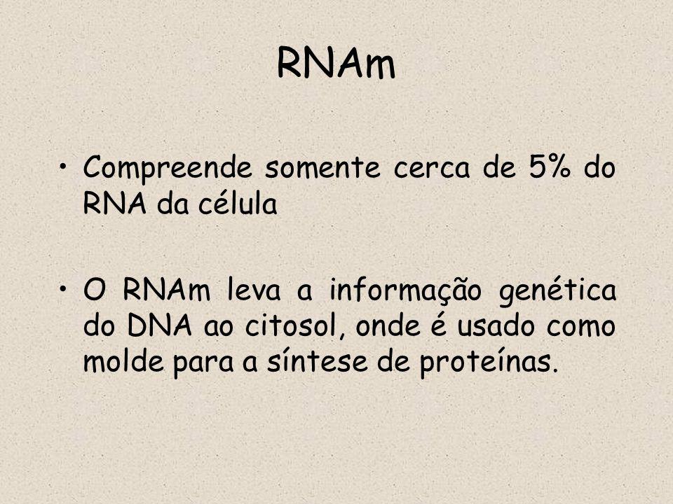 RNAm Compreende somente cerca de 5% do RNA da célula O RNAm leva a informação genética do DNA ao citosol, onde é usado como molde para a síntese de pr